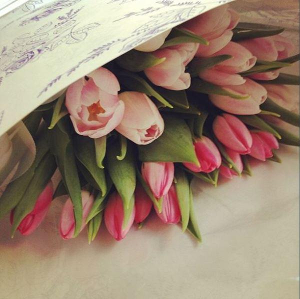 insta tulips